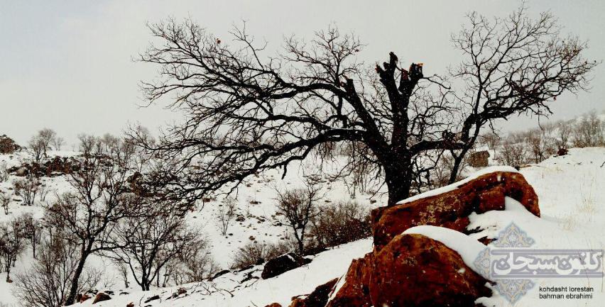 تصاویر برف پاییزی کوهدشت لرستان آذر 94 (4)