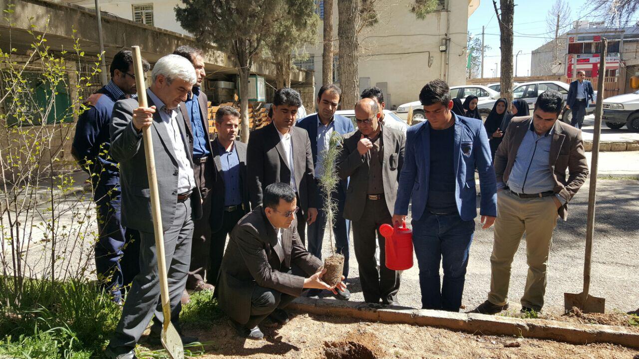 درخت کاری پیام نور کوهدشت (2)