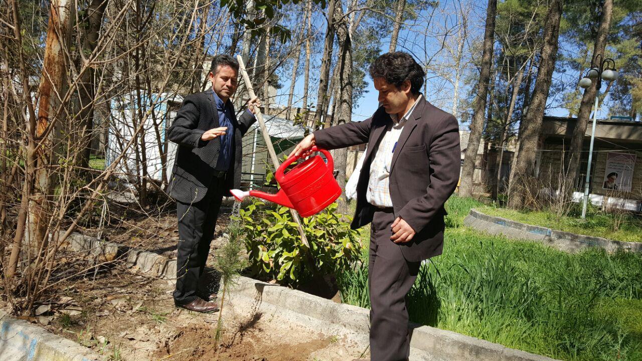 درخت کاری پیام نور کوهدشت (5)