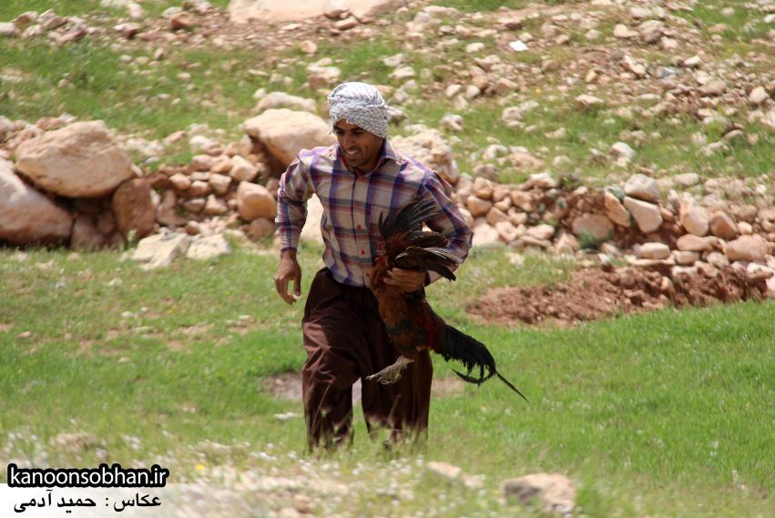 تصاویر جشنواره بازي هاي بومي و محلي کوهدشت (18)