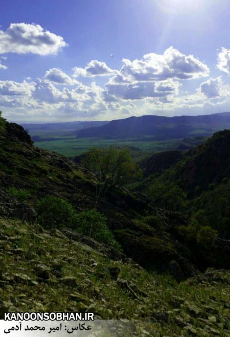 تصاویر طبیعت بهاری 95 تن قلای کوهدشت (3)