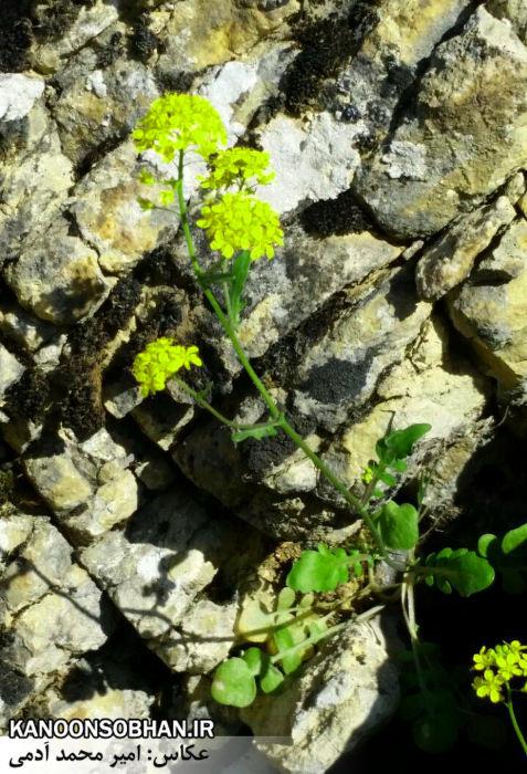 تصاویر طبیعت بهاری 95 تن قلای کوهدشت (5)
