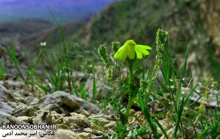 تصاویر طبیعت بهاری 95 تن قلای کوهدشت (7)