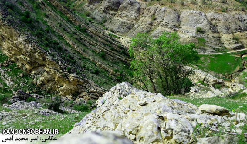 تصاویر طبیعت بهاری 95 تن قلای کوهدشت (8)