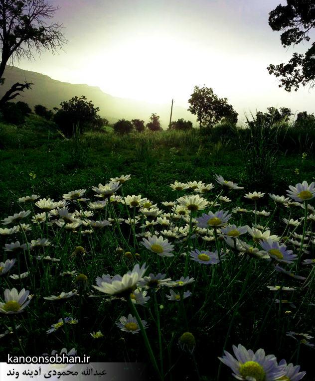 گزارش تصویری از«اولاد قباد» تا «تنگه شیرز» کوهدشت (12)