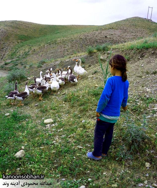 گزارش تصویری از«اولاد قباد» تا «تنگه شیرز» کوهدشت (3)