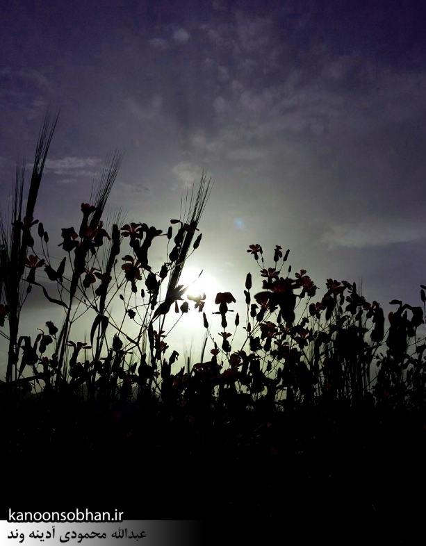 گزارش تصویری از«اولاد قباد» تا «تنگه شیرز» کوهدشت (6)