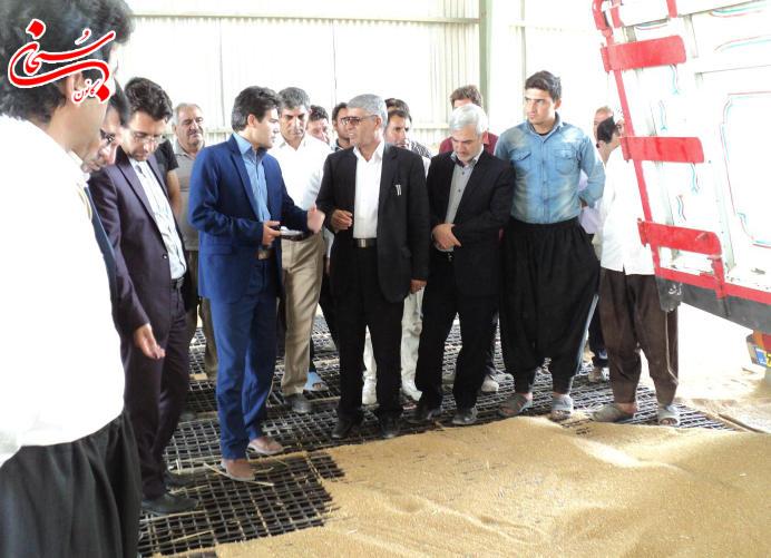 تصاویر بازدید فرماندار کوهدشت از مراکز خرید گندم و جو (2)